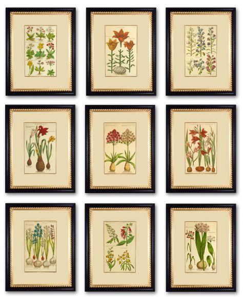 De Bry Botanicals in Deluxe Handmade Frames