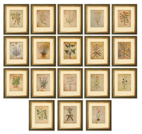 Dioscurides Herbals in Deluxe Handmade Frames