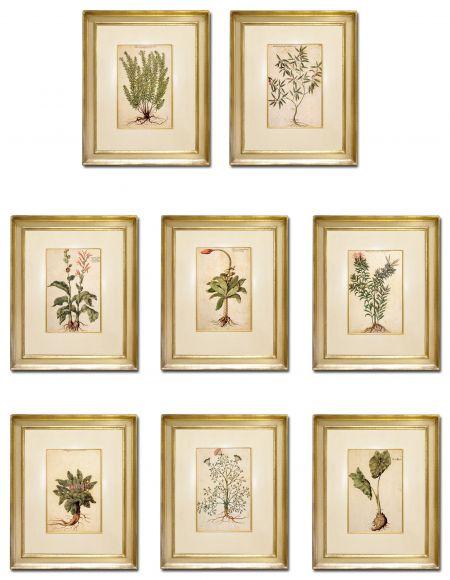 Garzoni Botanicals in Deluxe Handmade Frames