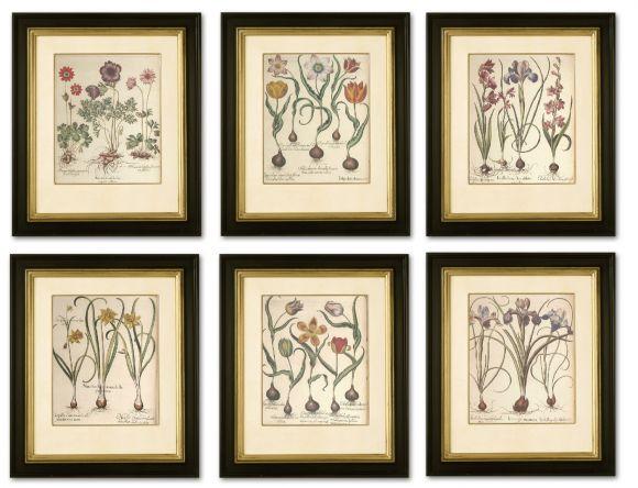 Hortus (Besler) Botanicals in Deluxe Handmade Frames