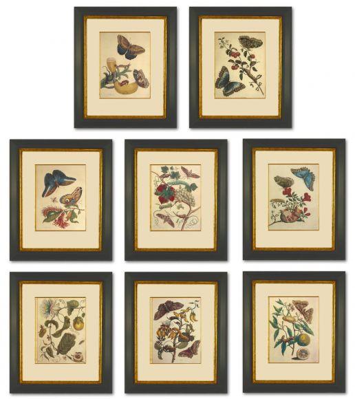 Merian Butterflies in Deluxe Handmade Frames