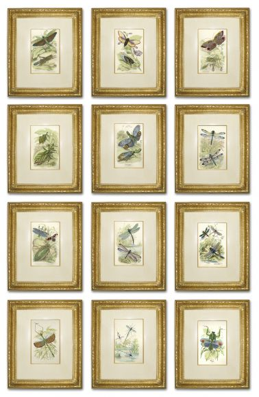Wroughton Insects in Deluxe Handmade Frames