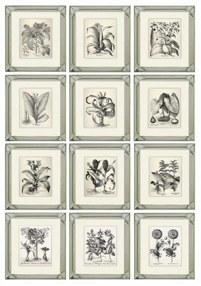 Besler Botanicals in Deluxe Mirror Frames
